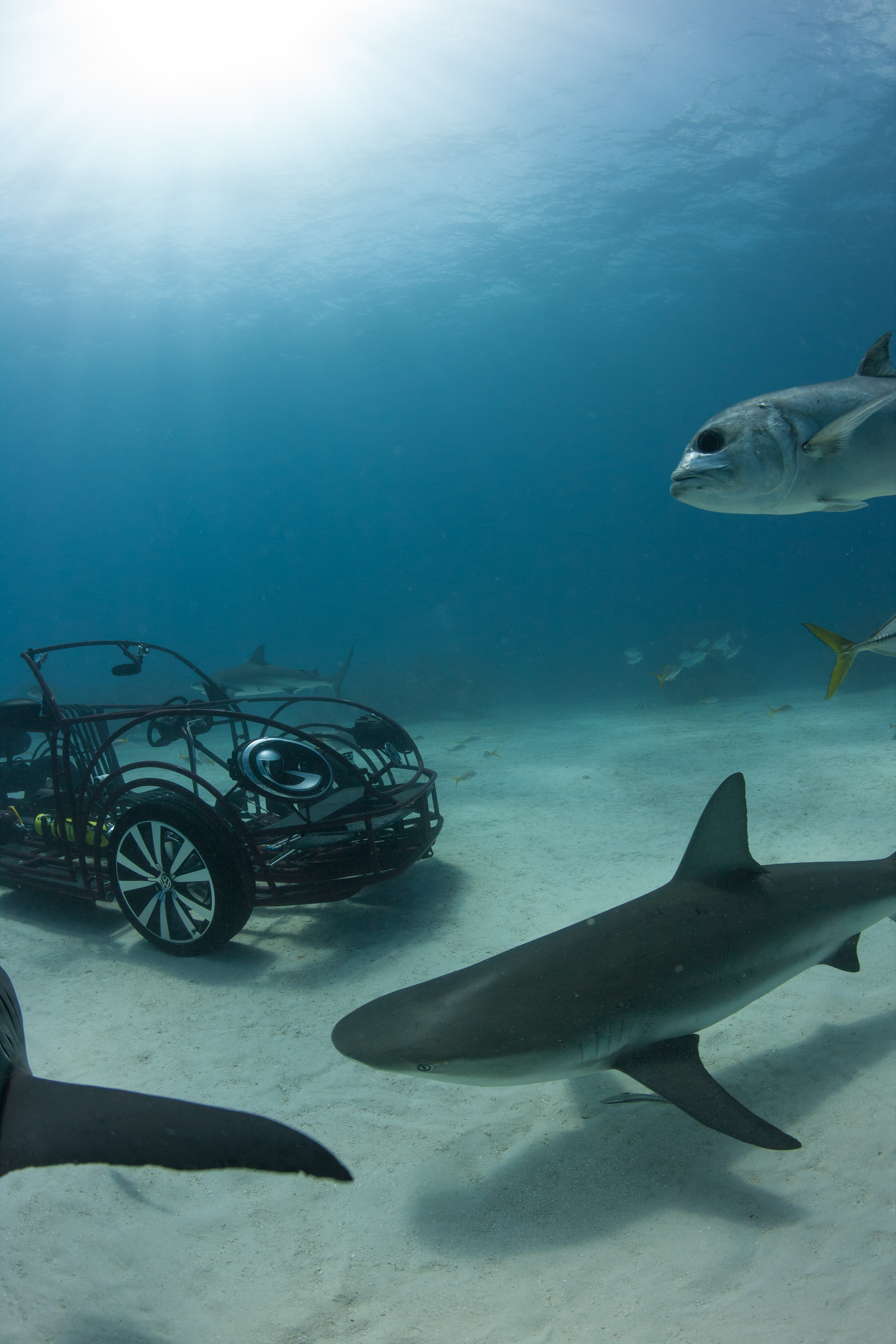Shark Week 2013 New Century Volkswagen