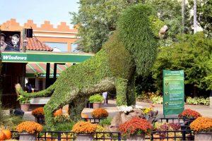grass lion at Busch Gardens