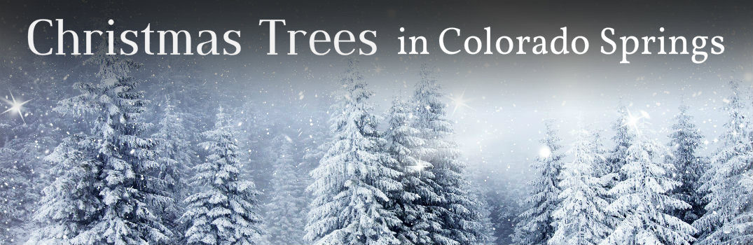 cut your own Christmas tree in Colorado Springs CO