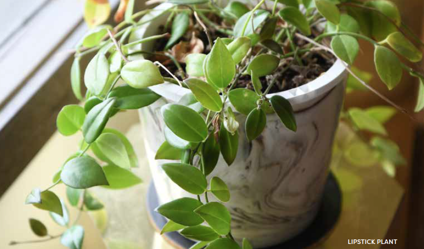 A How-To Guide to Houseplants