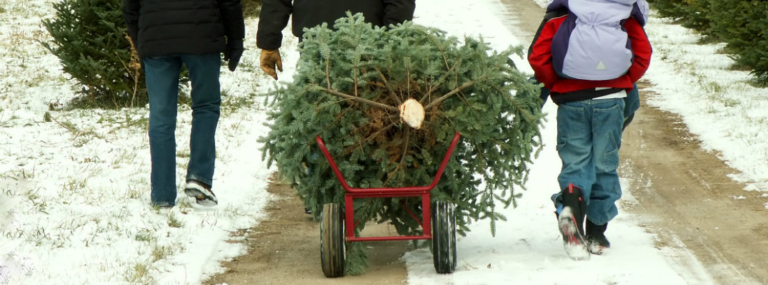 Where to Get a Christmas Tree near Rome GA