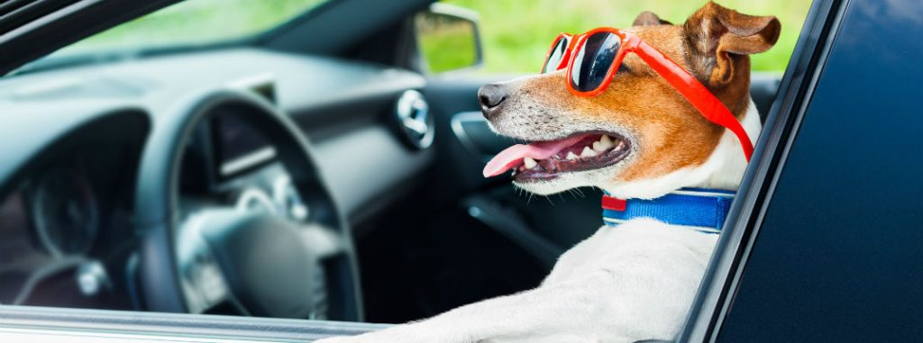 Pictures Of Dogs In Mercedes-Benz Cars And SUVs