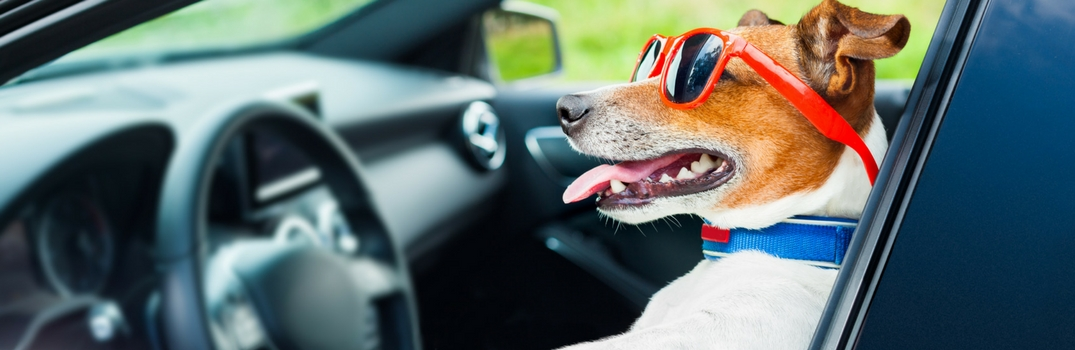 Dogs with Mercedes-Benz Models