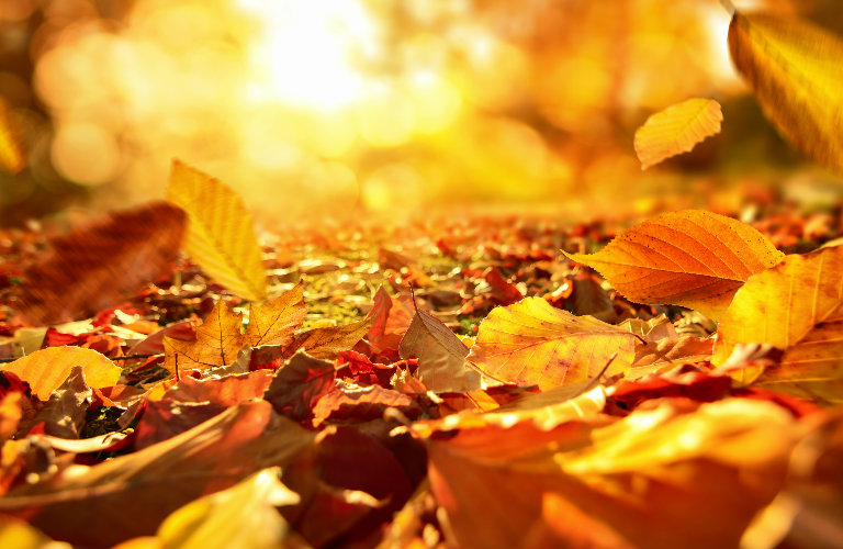 Mercedes Roadside Assistance >> closeup-of-fall-leaves-on-the-ground_b - Mercedes-Benz of ...