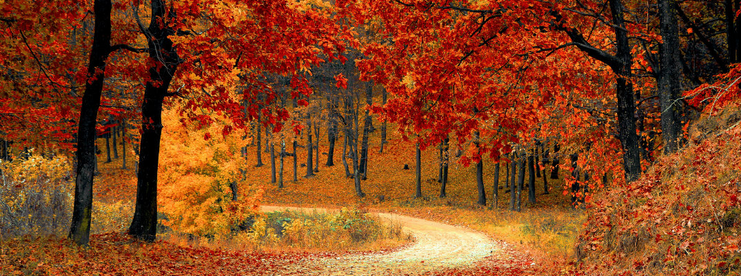 Nature trail in the fall season with red leaves