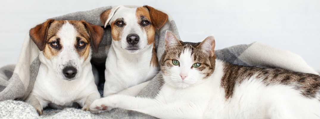 Image of two dogs and one cat