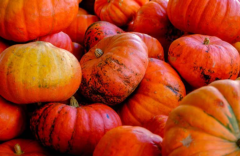 Colorful pumpkins in a pile
