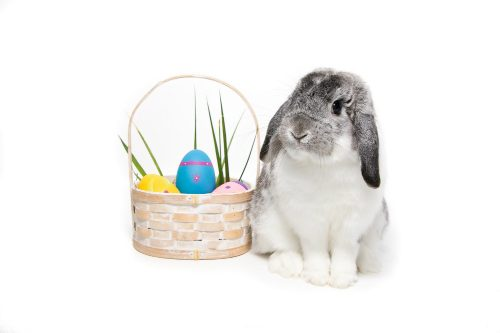 A cute rabbit sits curiously beside a basket out of which poke a few colored eggs and blades of grass.