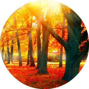 circle image of fall trees