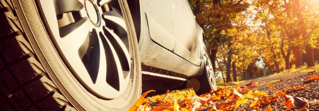 Prevent Damage To Your Vehicle From Falling Leaves With ...
