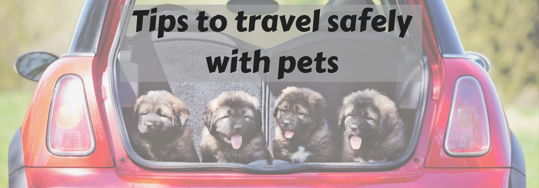 dogs in open cargo area of vehicle, tips to travel safely with pets