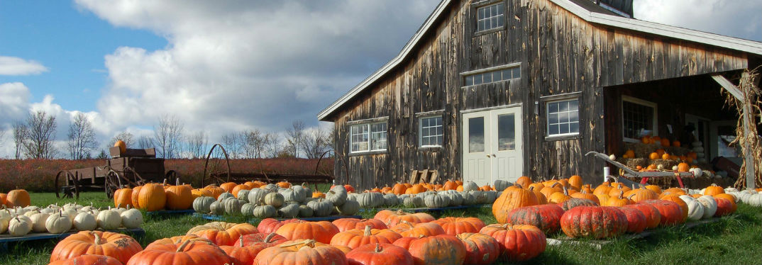 Best Pumpkin Patches near Lima, OH with image of a pumpkin farm