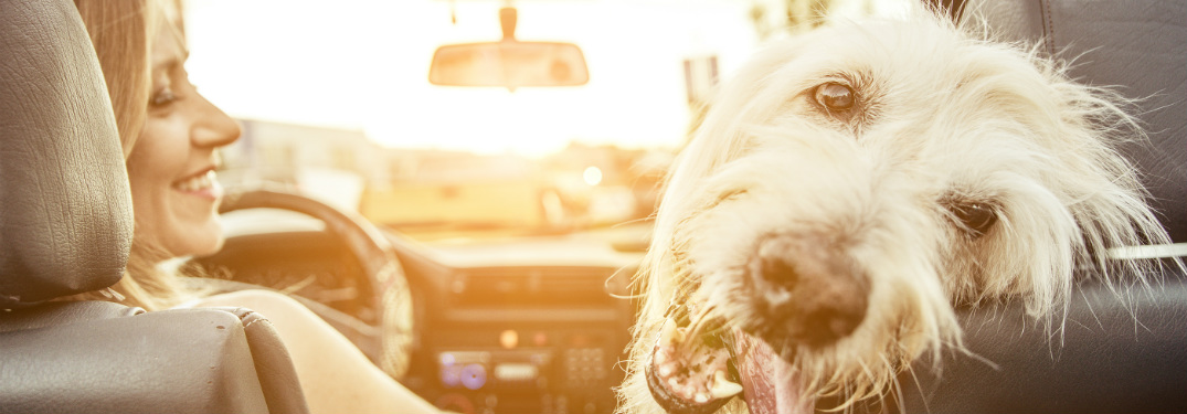 woman and dog in front seat of car with dog looking back