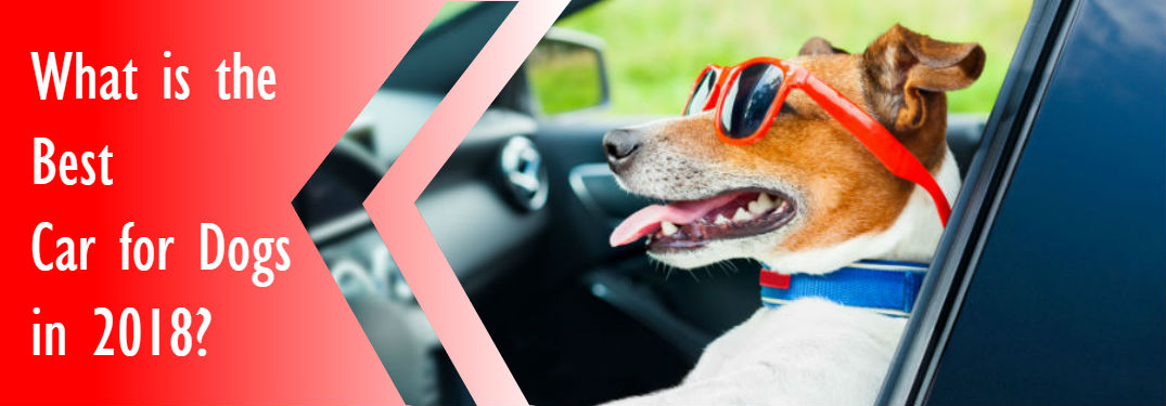dog driving car in front seat with Best car for dogs 2018 in text overlaid