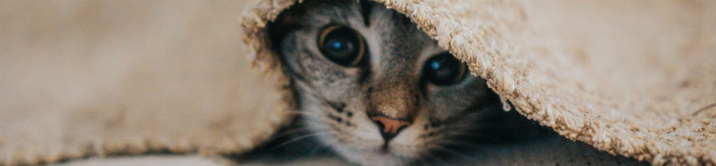 kitten under the covers