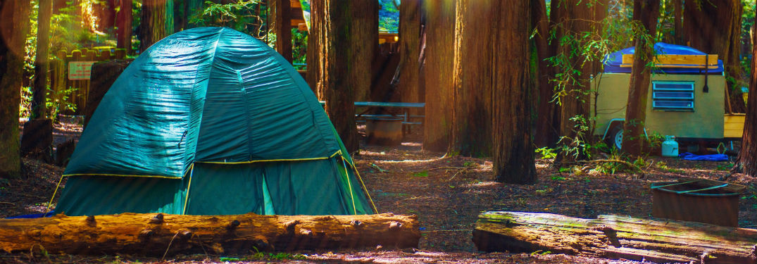 tent camping in redwood forest