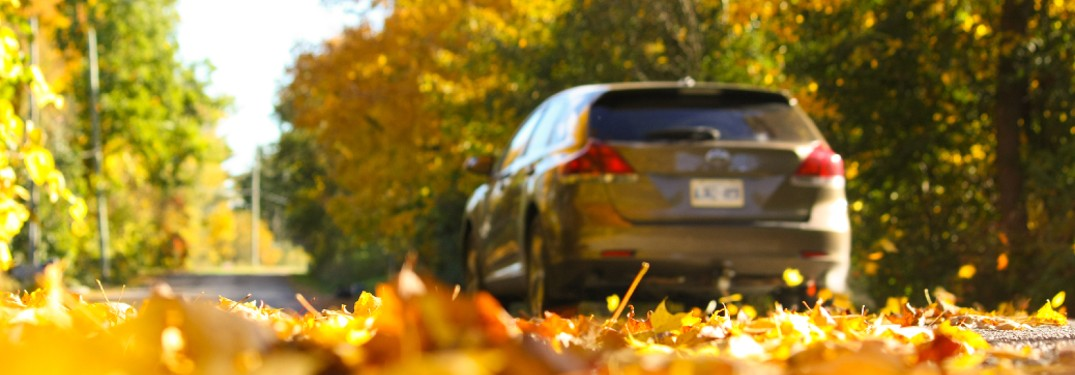SUV driving over leaves