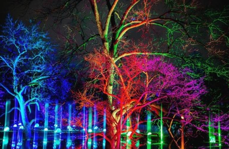 trees at the Tree Lights at the Morton Arboretum