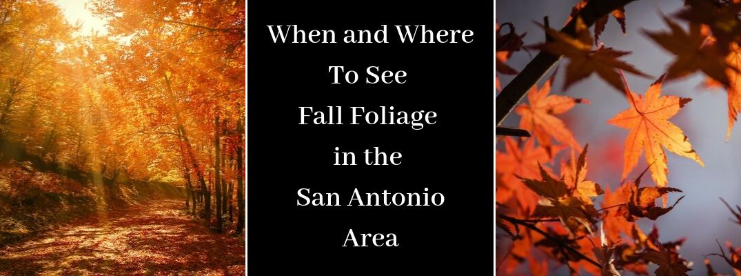 Sunlit Fall Trail and Foliage, Close Up of Fall Leaves and a Black Text Box with White When and Where To See Fall Foliage in the San Antonio Area Text