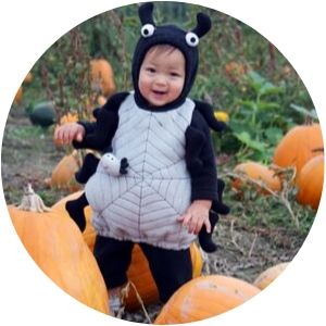 Little Boy Dressed as a Spider in a Pumpkin Patch