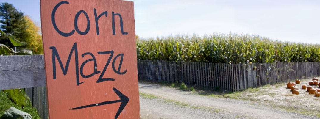 Orange Corn Maze Sign with Arrow Pointing to Cornfield