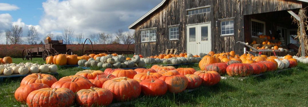 Enjoy the fall weather and find the perfect pumpkin!