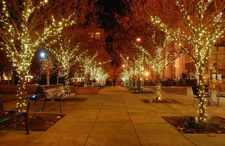 Sidewalk and trees with lights on them