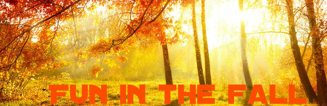 Top Forests to Tour This Fall Oneonta NY_b