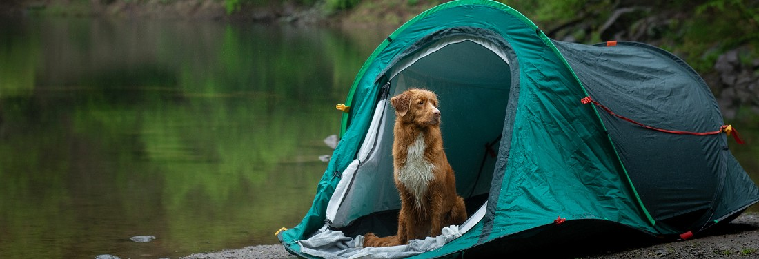 Dog sitting in tent by lake