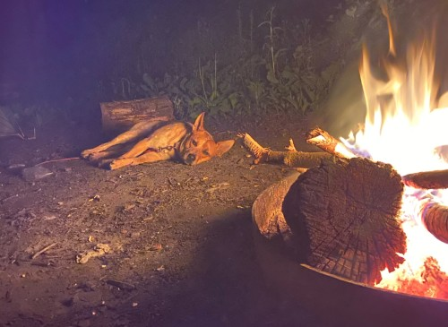 Rocky Red Heeler laying next to fire