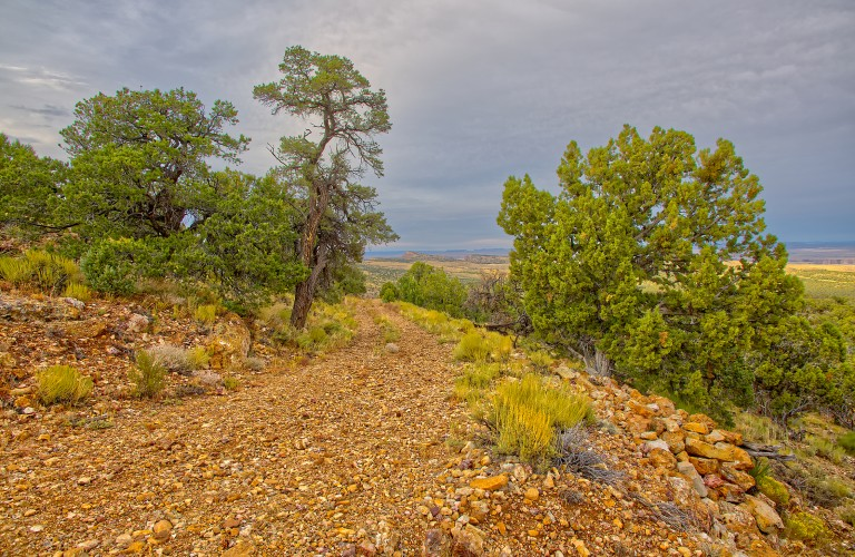 Nature at Palisade Trail, CO