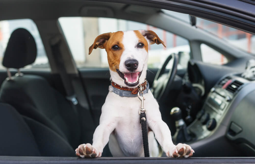 The Best Vehicles for Pets
