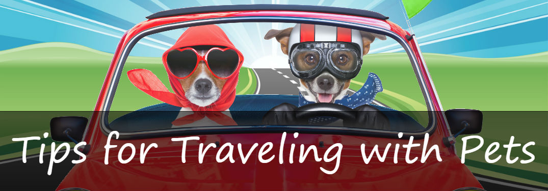 What's the best way to travel with pets?