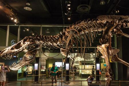 dinosaur exhibit in a museum