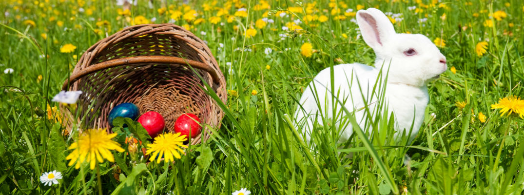 Bunny in field next to basket with painted eggs