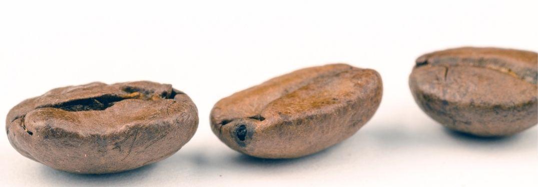 three coffee beans on white ground