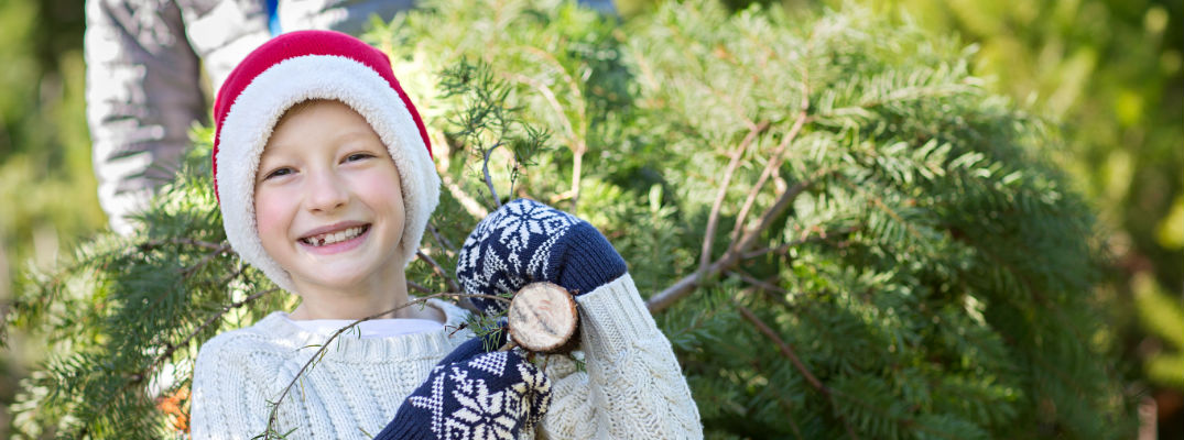 Smiling Boy in Santa Hat Dragging Fresh Cut Christmas Tree