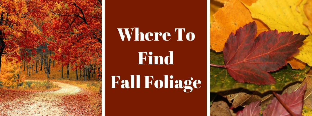 Where Are the Best Places to View Fall Foliage and Fall Colors in Maine?