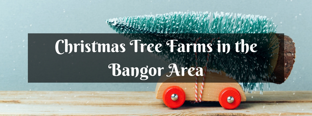 When and Where Can You Cut Your Own Christmas Tree Bangor ME?