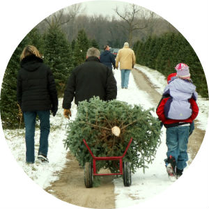 family carrying a fresh cut christmas tree