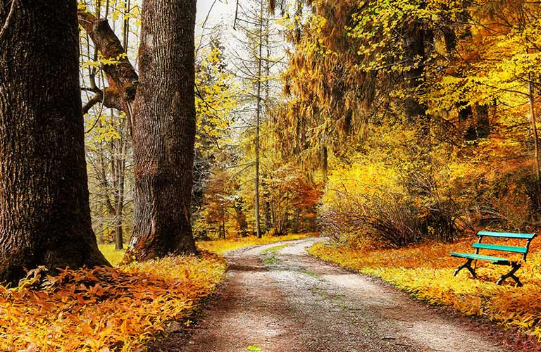 Dirt Road in the Woods in Fall