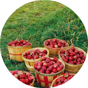 Baskets of Apples on Green Grass