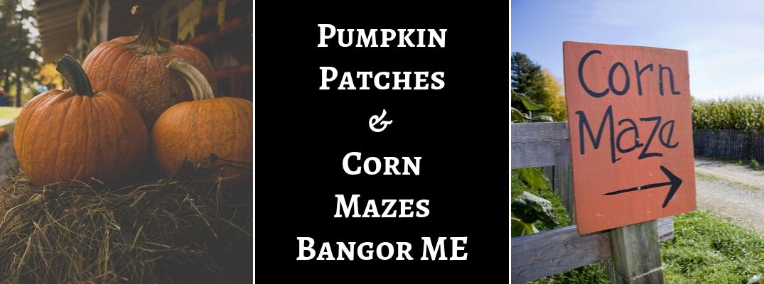 Where To Find the Best Pumpkin Patches and Corn Mazes in the Bangor Area