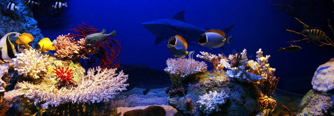 fish and shark swimming above a reef