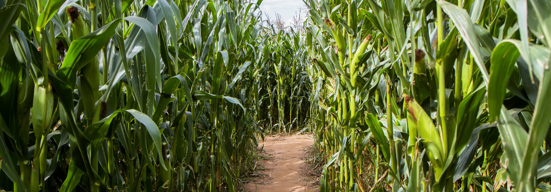 Corn maze designs in and near the Fox Valley