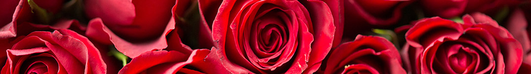 Roses up close banner image
