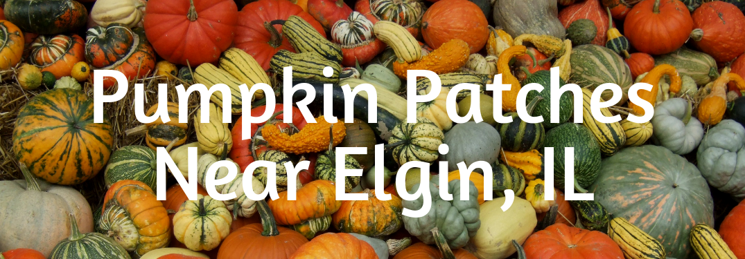 The Best Pumpkin Patches near Elgin, IL