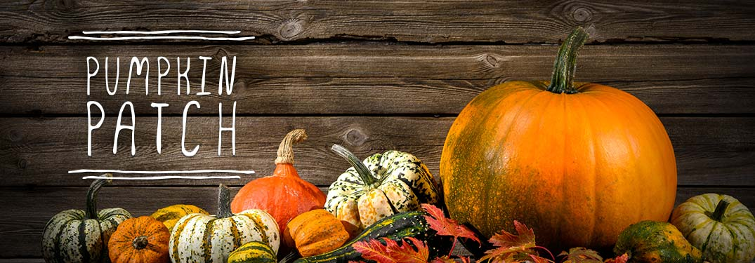 Pumpkin patches on wood background with pumpkins