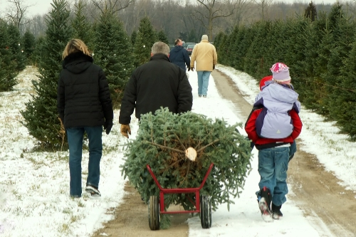 A child rolls a Christmas tree in a wagon as the parents walk on ahead.