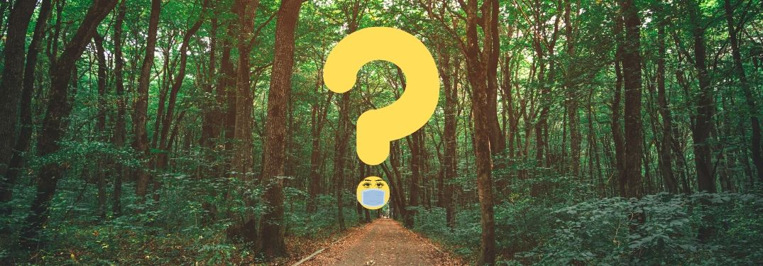 A question mark floating over a forest path is fitted with a mask